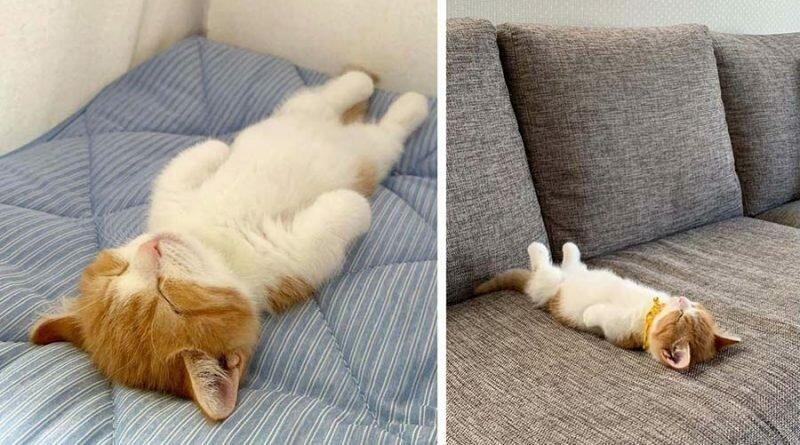 Котенок который спит