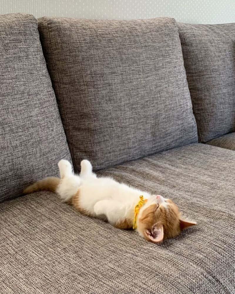 Котенок который спит 4