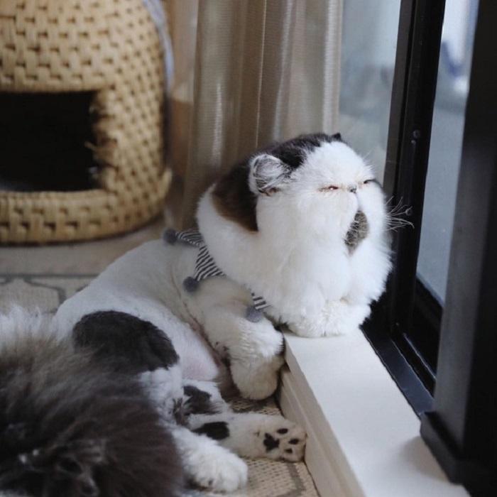 прелестный кот 2