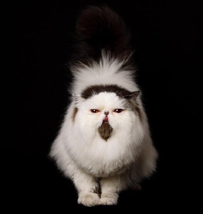 прелестный кот 4