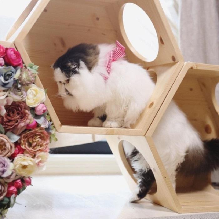 прелестный кот 10