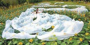Фантазии невест на тему свадебных платьев безграничны...
