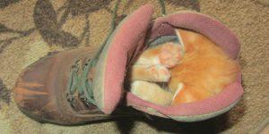 Животные могут уснуть в любой позе: 25 фото